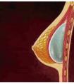 龙8国际网址月经期的女性可以做假体隆胸手术吗